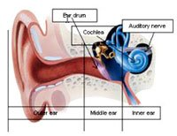 A diagram of the ear and how it relates to tinnitus