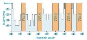Graph of REM sleep cylces